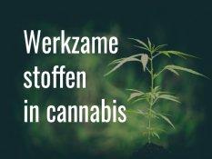 Werkzame stoffen in cannabis