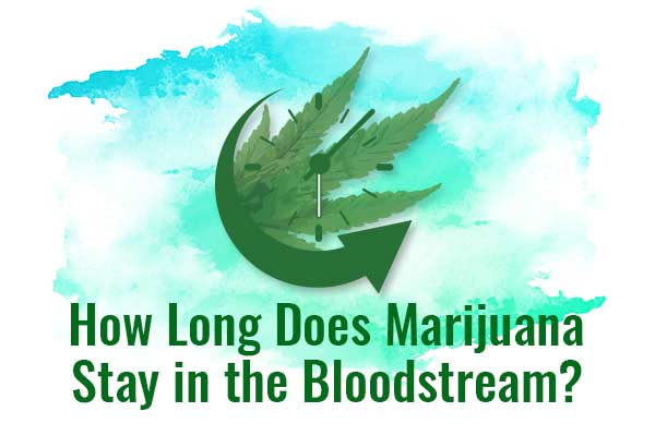 How Long Does Marijuana Stay in your System (Bloodstream, Urine