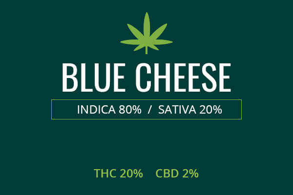 Marijuana Blue Cheese