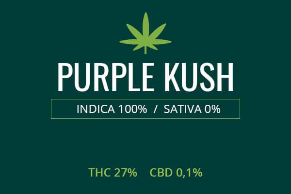 Marijuana Purple Kush