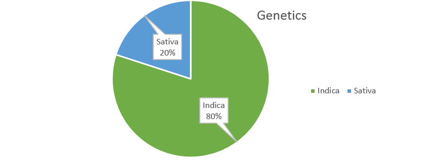 MR. NICE GUY weed strain genetics