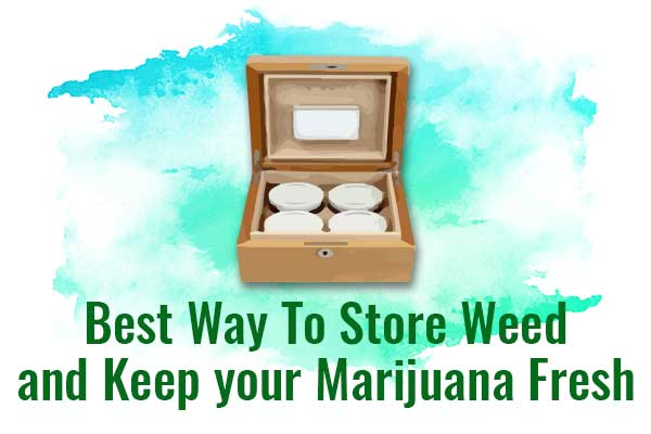 Best Way To Store Weed and Keep your Marijuana Fresh - NCSM
