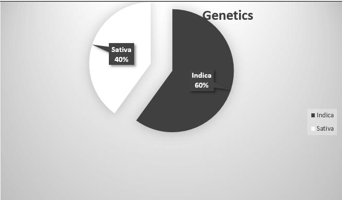 headband genetics