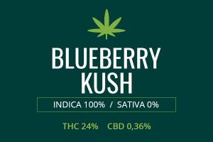 Marijuana Blueberry Kush