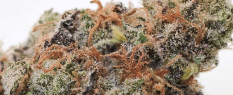 Caviar strain photo