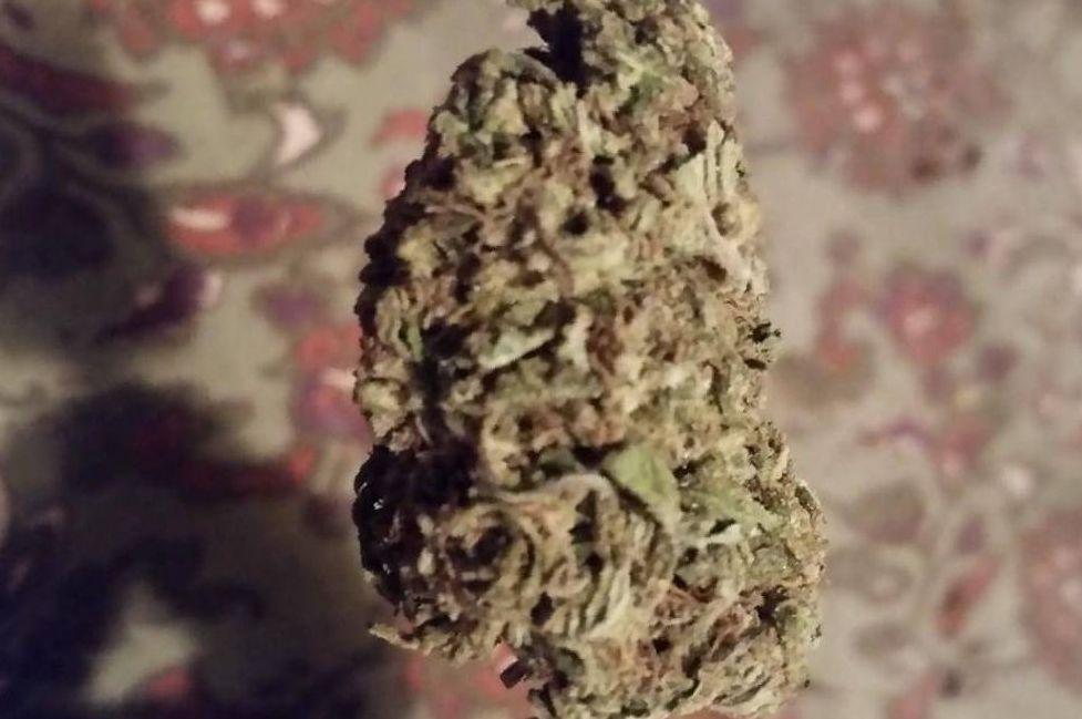 Blueberry Kush weed strain