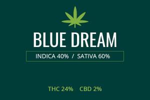 Marijuana Blue Dream