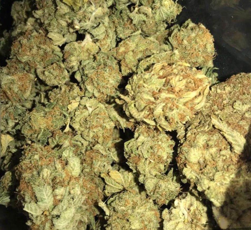 growing Bubba Kush strain