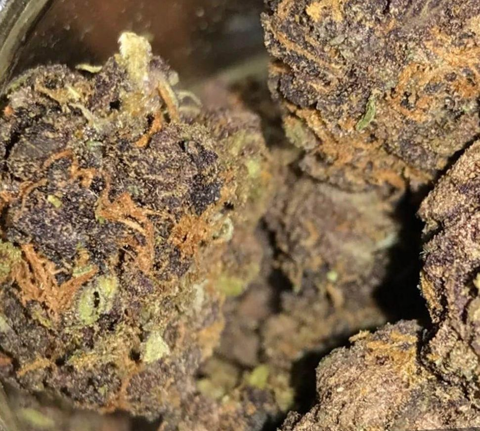 Marijuana Blue Dream Strain Review - NCSM