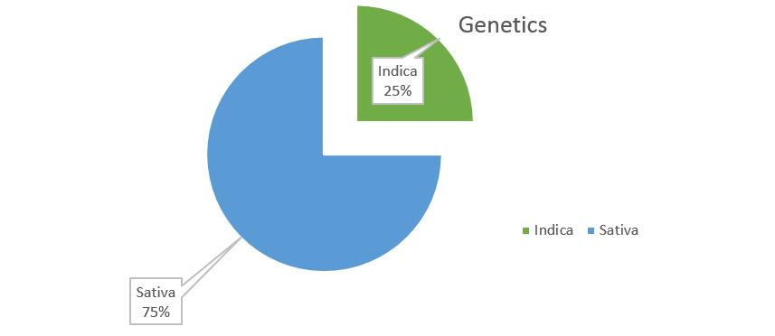 Harlequin weed Strain genetics