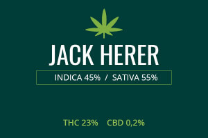 Marijuana Jack Herer