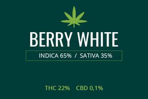 Marijuana Berry White