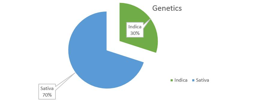 Sour Diesel weed Strain genetics