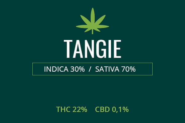 Marijuana Tangie