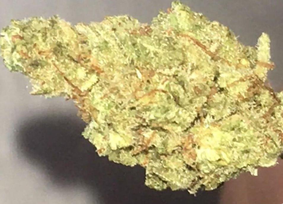 Marijuana Agent Orange strain