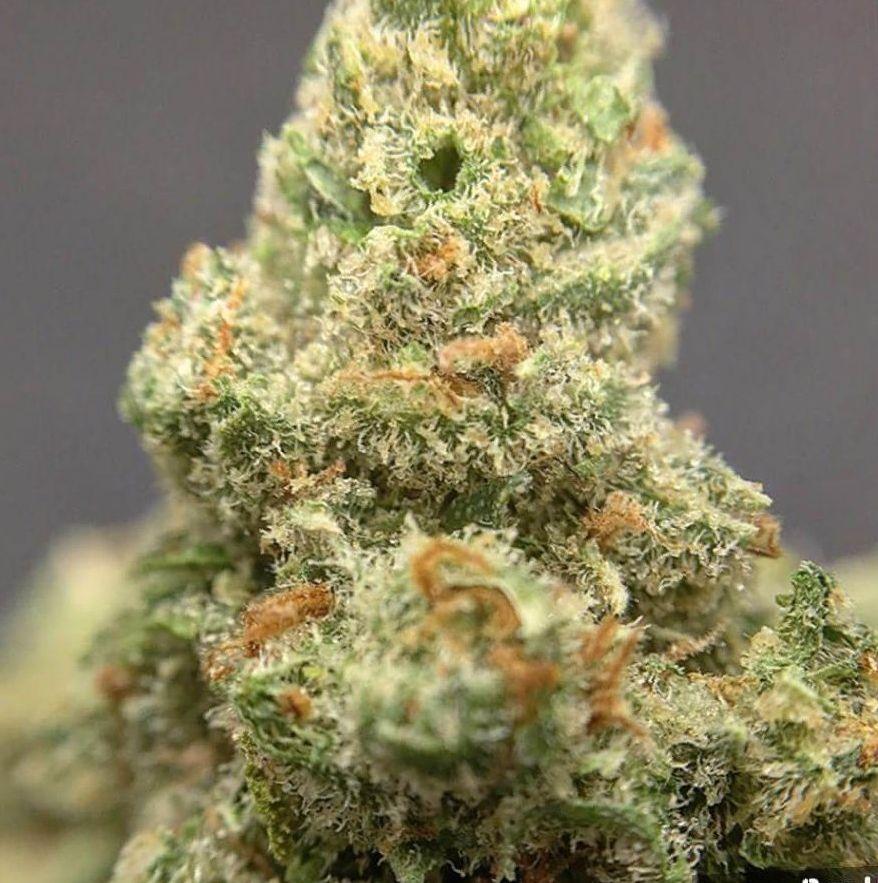 Cannabis Jack Herer Strain