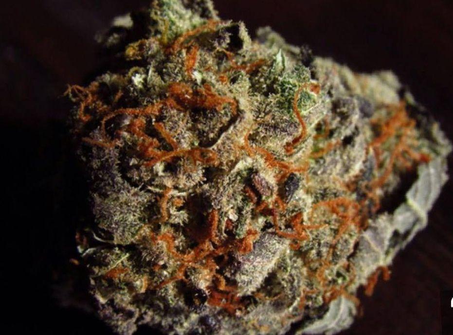 cannabis Tangie strain