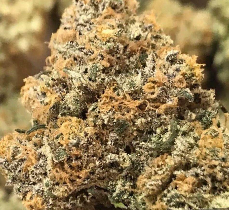 Marijuana Alien OG strain