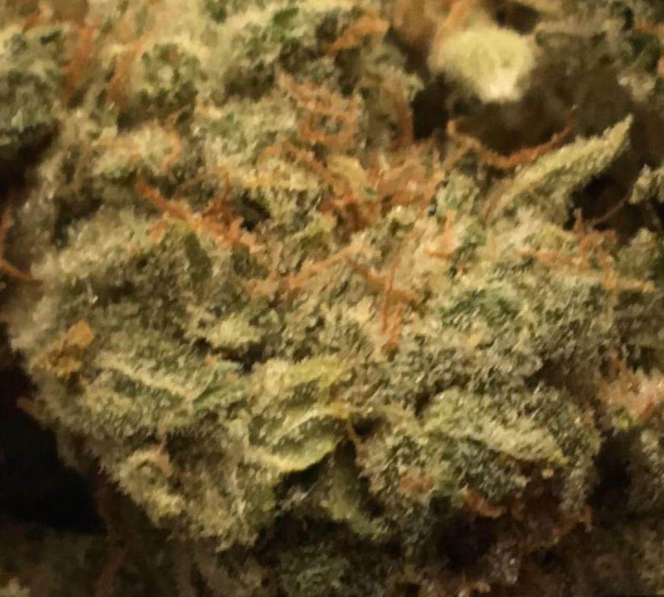 cannabis Gorilla Glue 4 strain`