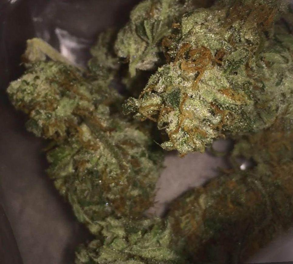 marijuana Silver Haze strain