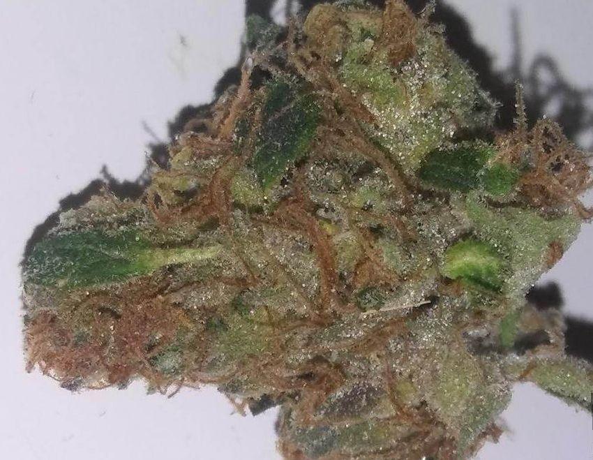marjuana Tahoe OG strain