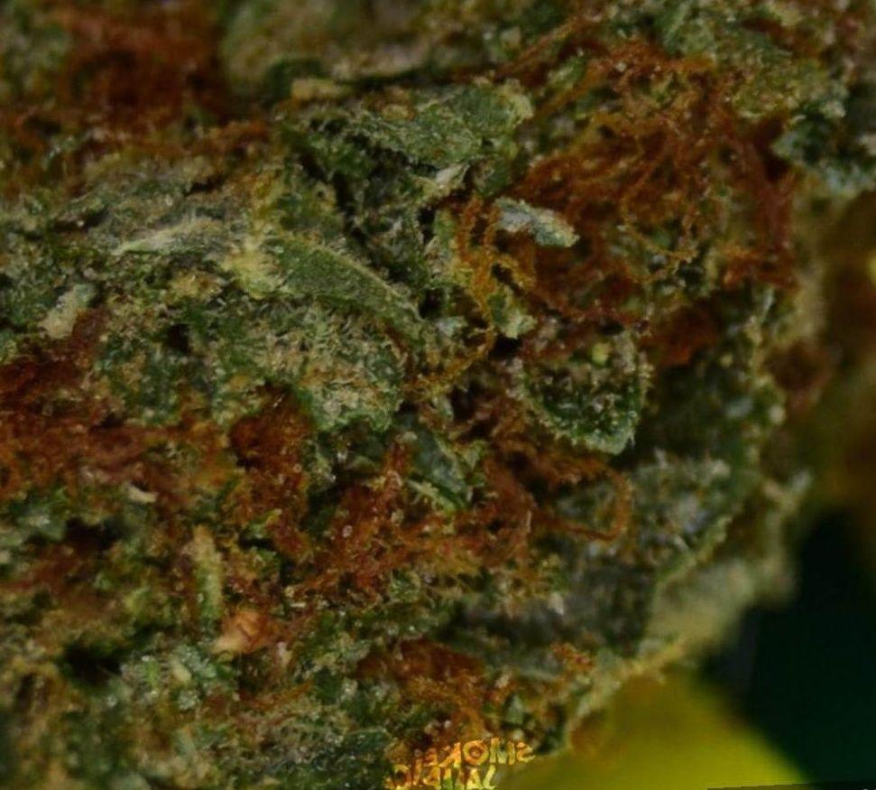 cannabis Tahoe OG weed strain