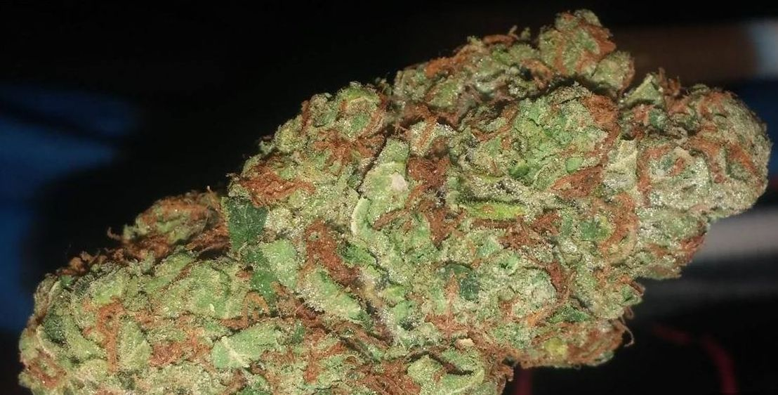 Alien OG weed strain