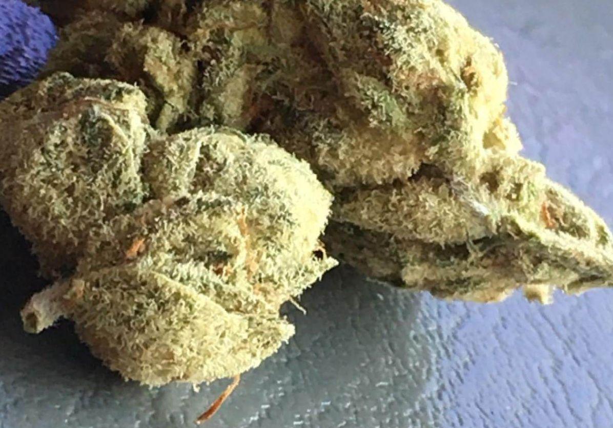 Gorilla Glue 4 weed strain