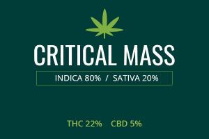 Marijuana Critical Mass