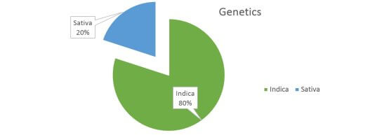 Critical Mass weed strain genetics