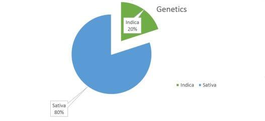 Maui Waui weed strain genetics