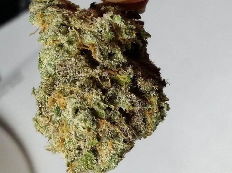 Cannabis Romulan Strain