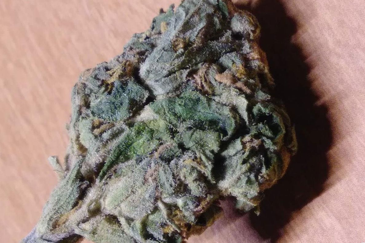 Cannabis Sweet Tooth Strain