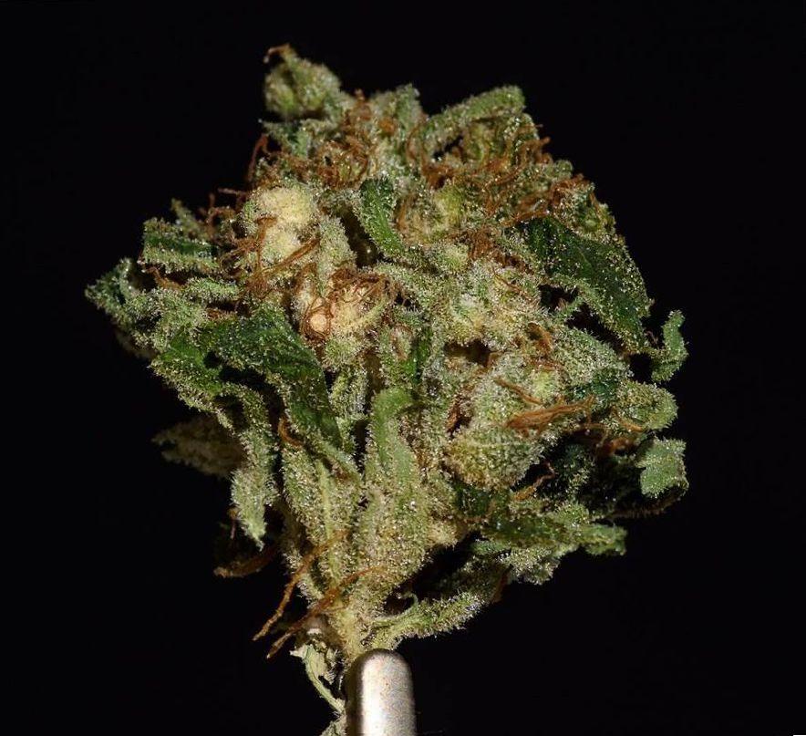 Cannabis MK Ultra Strain
