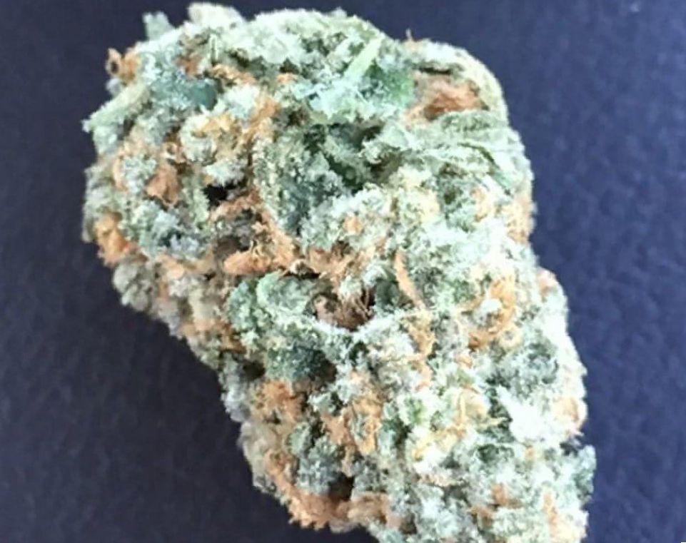 Cannabis Critical Mass strain