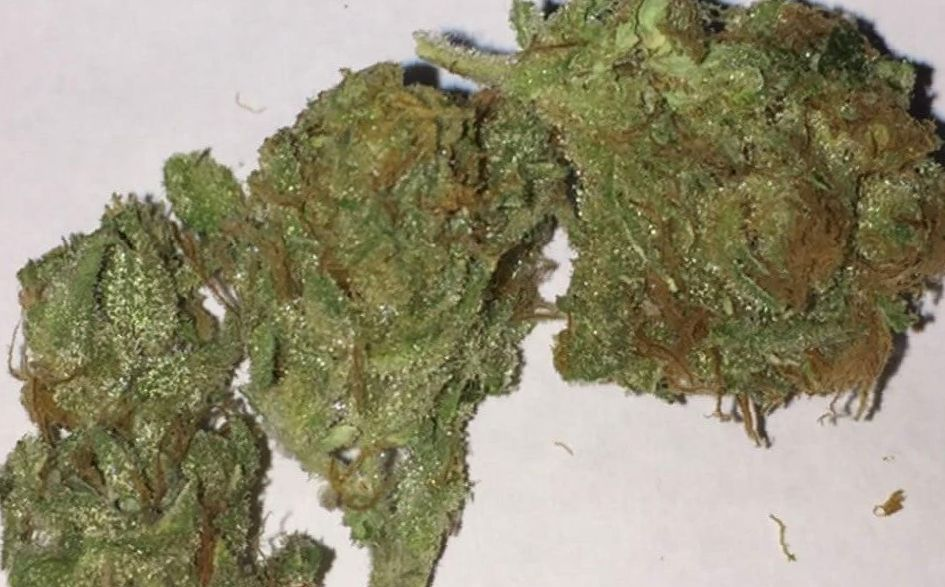 Critical Mass weed strain