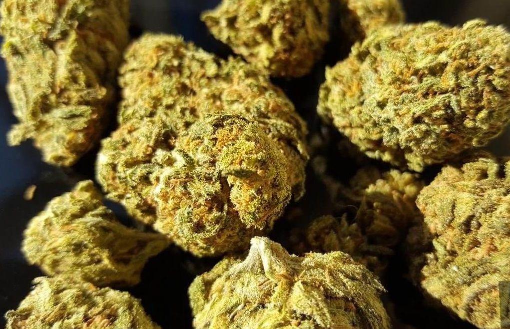 Dream Queen Strain marijuana photo