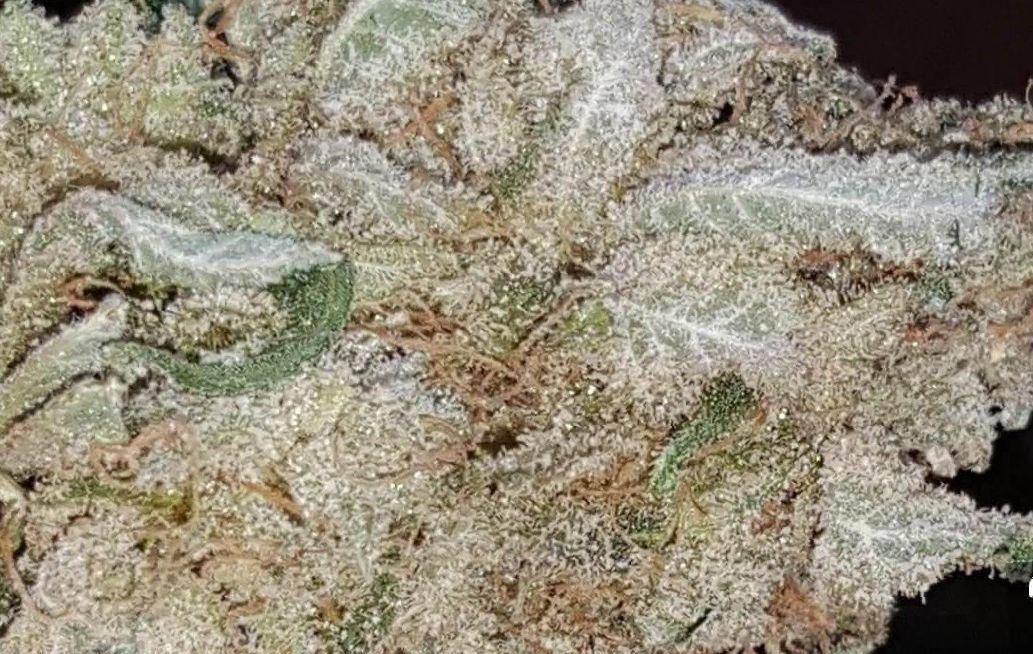 God's Gift Strain marijuana photo