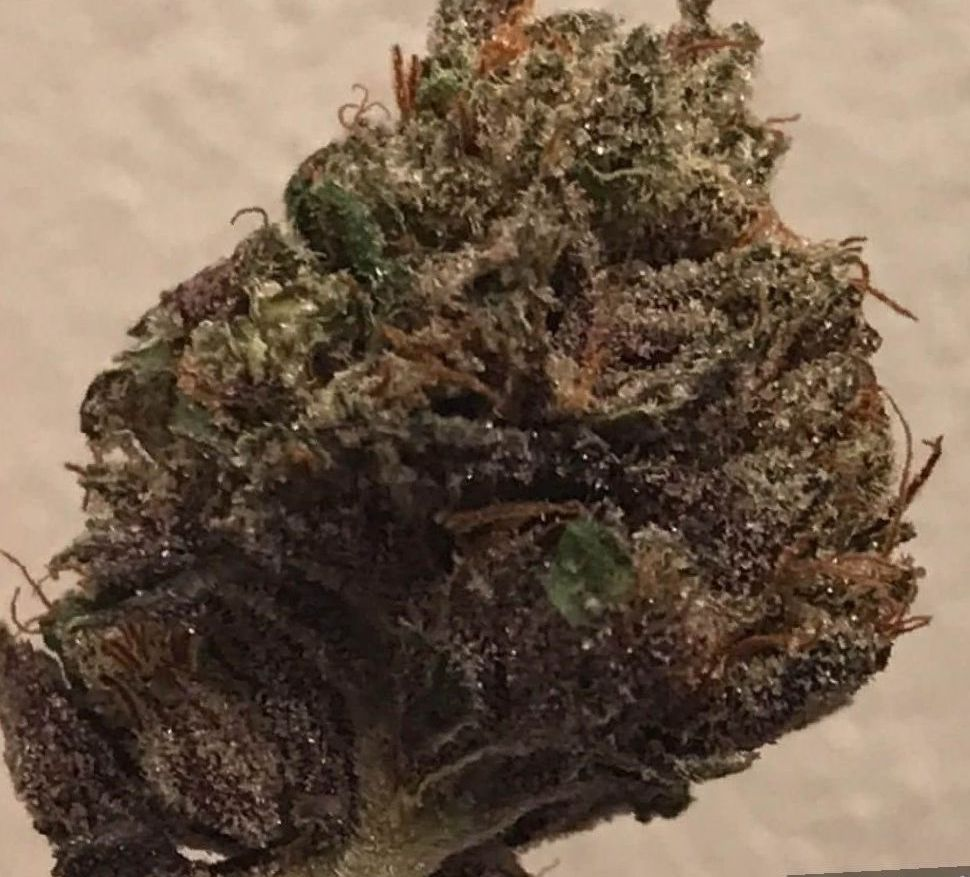 Holy Grail Kush Strain marijuana review