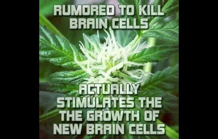 marijuana stimulates brain