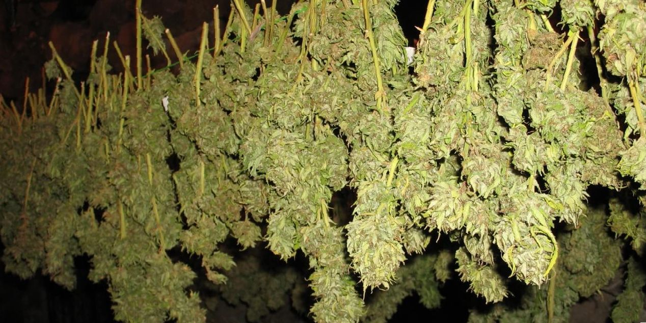 weed quickdry