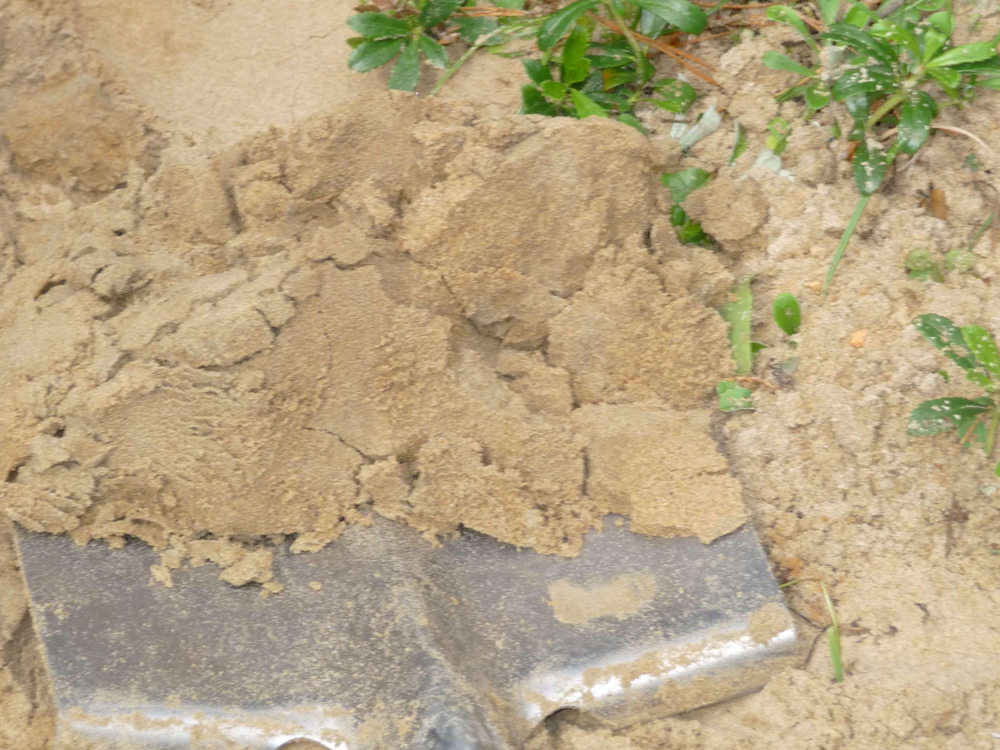 Loam Soil