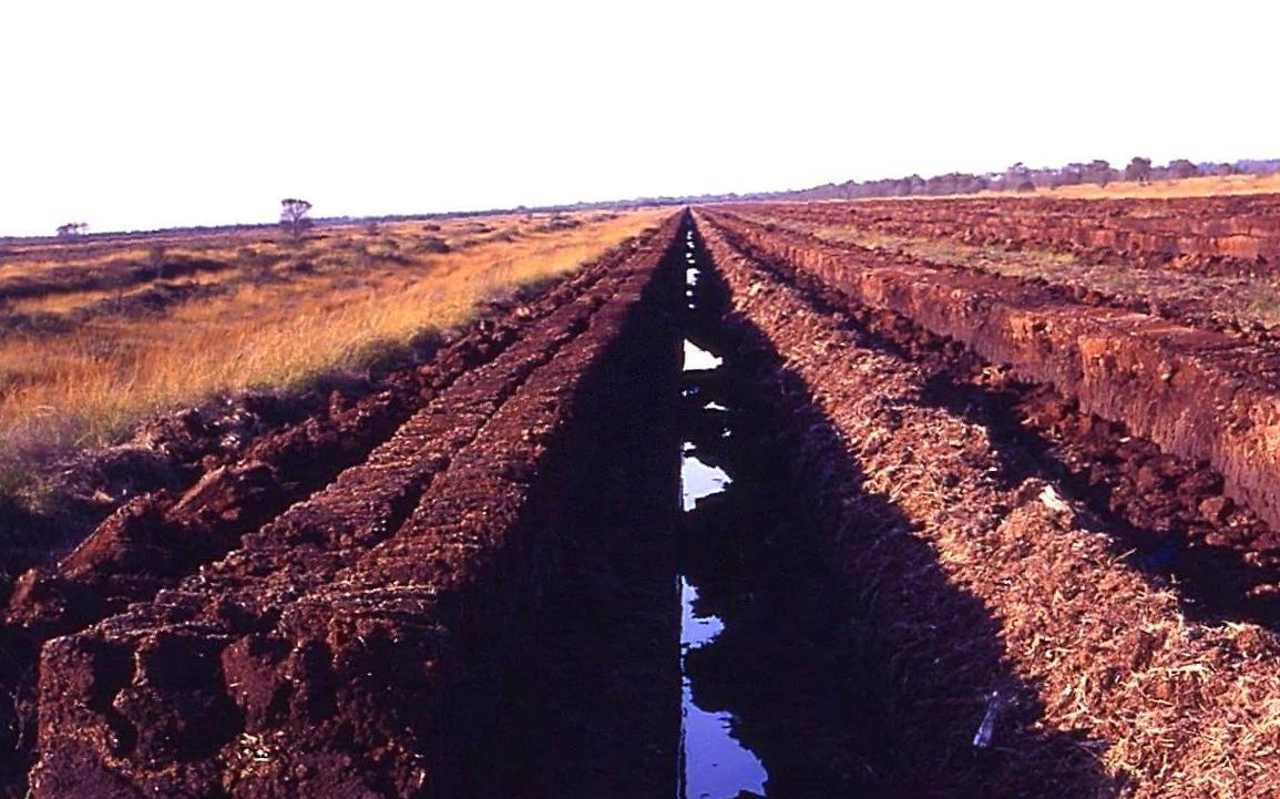 Peat Soil Fields