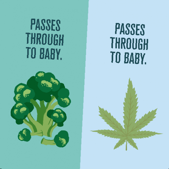 pregnancy marijuana what every-colorado mom should know