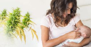 weed effects breastmilk
