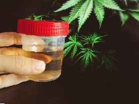 Synthetic Urine reviews  Fake pee FAQ and tips