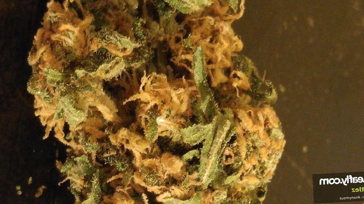 Zkittlez marijuana review