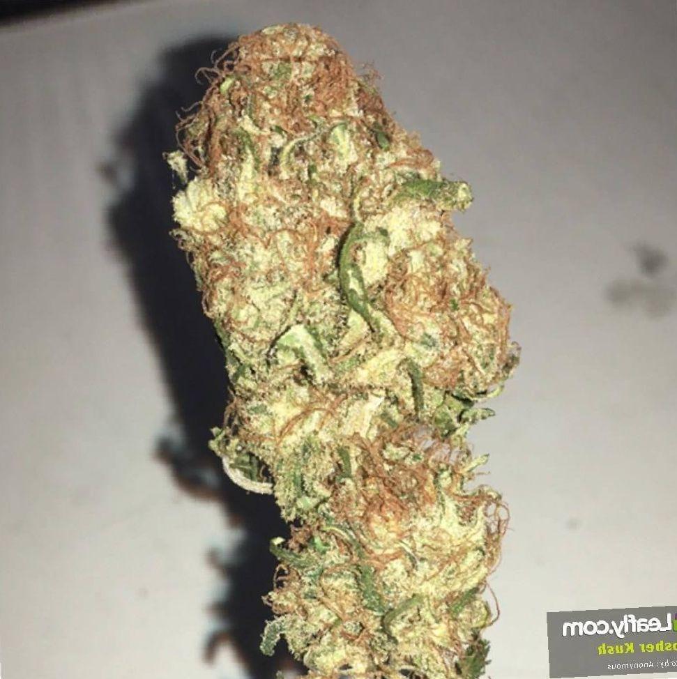 kosher kush weed grow