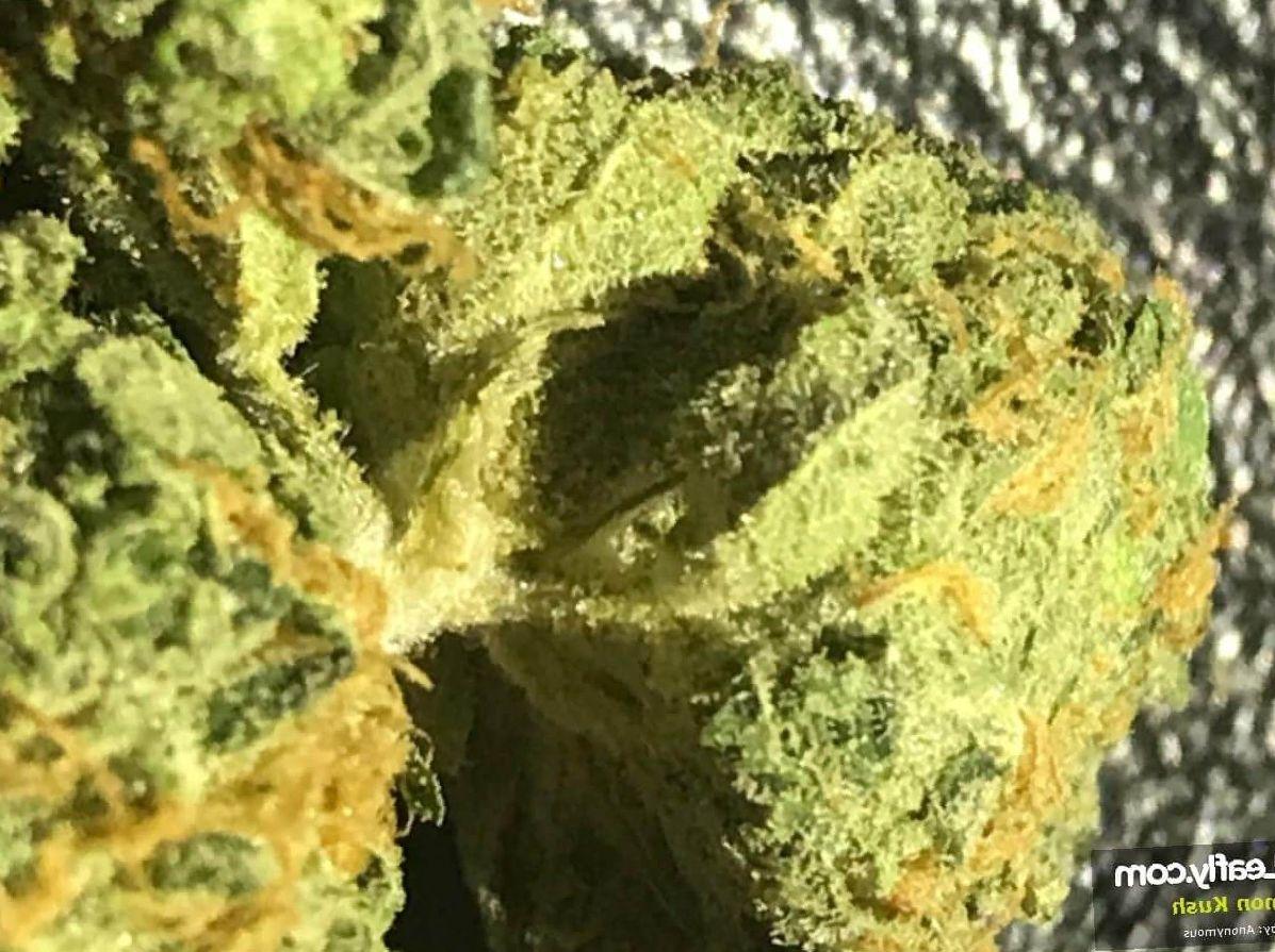 Lemon Kush weed photo