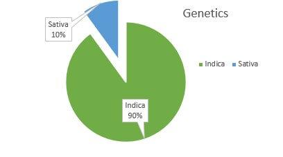 Critical Kush weed Strain genetics